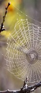 spiders-web-2