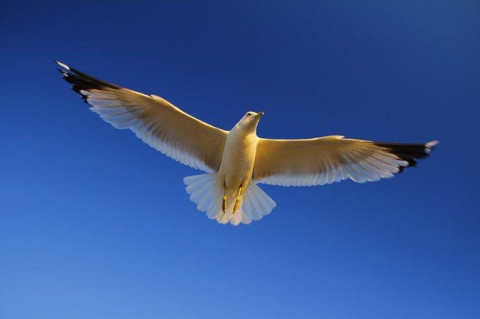 white_bird_soaring.jpg