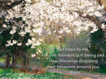 blossom1